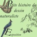 Affiche Dessin naturaliste